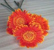 Parte dianteira de gerberras da laranja do ramalhete Fotografia de Stock