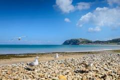 Parte dianteira de mar de Llandudno em Gales norte, Reino Unido Fotografia de Stock Royalty Free