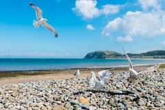 Parte dianteira de mar de Llandudno em Gales norte, Reino Unido Fotos de Stock Royalty Free