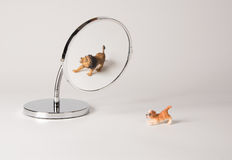Parte dianteira do espelho - cachorrinho da autoconfiança Fotografia de Stock