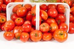 Parte dianteira próxima acima da cesta de tomates do campo Foto de Stock