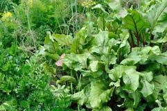 Parte do jardim vegetal Foto de Stock