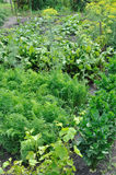 Parte do jardim vegetal Imagem de Stock Royalty Free