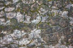 Parte do pavimento concreto modelado Fotos de Stock Royalty Free