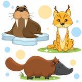 Parte 19 dos animais Imagem de Stock