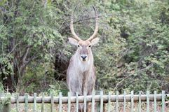Parte externa animal exótica no selvagem fotos de stock royalty free