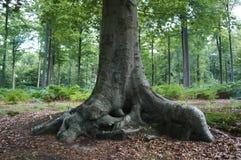 Parte inferior bonita de um coto de árvore Imagens de Stock