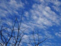 Parte inferior da árvore do céu Imagens de Stock Royalty Free