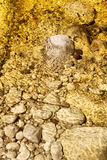 Parte inferior da mola dourada da cor imagem de stock royalty free