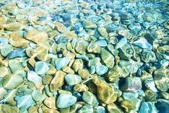 Parte inferior de mar con plantas de la alga marina y una concha de berberecho Fotos de archivo libres de regalías