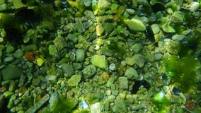 Parte inferior de mar sob a água Águas do Adriático, Montenegro texto filme