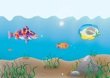 Parte inferior de oceano Imagem de Stock