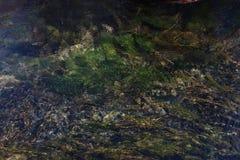 Parte inferior de uma lagoa em Jiuzhaigou Fotografia de Stock