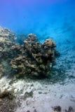 Parte inferior del mar tropical con el arrecife de coral en fondo del agua azul en la gran profundidad Imágenes de archivo libres de regalías