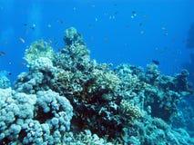 Parte inferior del mar tropical con el arrecife de coral en profundidad grande Imágenes de archivo libres de regalías