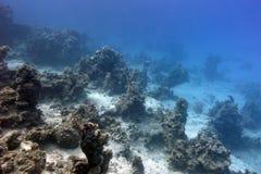 Parte inferior del mar tropical con el arrecife de coral en profundidad grande en fondo del agua azul Fotos de archivo