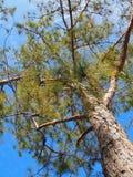 Parte inferior do céu da árvore Foto de Stock