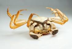 Parte inferior do caranguejo acima Imagens de Stock