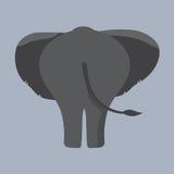 Parte inferior do elefante Foto de Stock Royalty Free