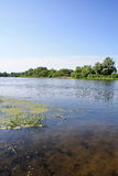 Parte inferior transparente do rio pitoresco Fotografia de Stock Royalty Free