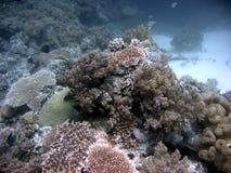 Parte inferiore del mare Fotografie Stock