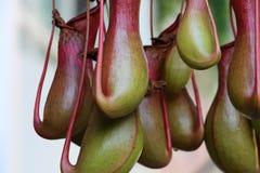Parte inferiore delle orchidee interessanti sul mercato dei flowerFotografia Stock