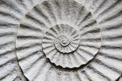 Parte interna del fossile delle coperture - fuori fotografia stock libera da diritti