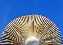 Parte mais inferior do cogumelo imagens de stock