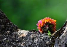 Parte natural da árvore com a fotografia do fundo das flores Foto de Stock Royalty Free