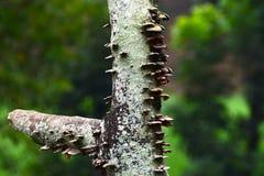 Parte natural de uma fotografia do fundo da árvore Fotos de Stock