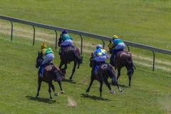 Parte posterior de la carrera de cuatro caballos a continuación Foto de archivo