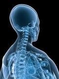 Parte posterior de la hembra de la radiografía Foto de archivo libre de regalías