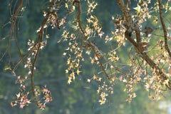 Parte posterior de la luz de las hojas por la tarde Imagen de archivo libre de regalías
