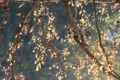 Parte posterior de la luz de las hojas por la tarde Fotos de archivo libres de regalías