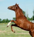 Parte posteriore del cavallo Fotografia Stock Libera da Diritti