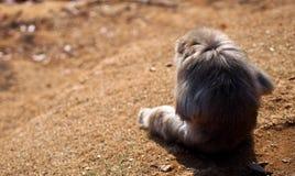 Parte posteriore della scimmia della montagna Fotografia Stock Libera da Diritti