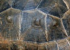 Parte posteriore di struttura della tartaruga della tartaruga Immagini Stock