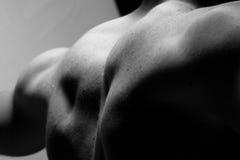 Parte posteriore muscolare fotografia stock
