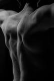 Parte posteriore muscolare fotografia stock libera da diritti