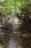Parte salmastra delle zone umide della traccia del mastice, isola di Grand Cayman immagine stock