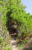Parte salmastra delle zone umide della traccia del mastice, isola di Grand Cayman immagine stock libera da diritti