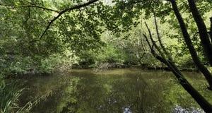 Parte salvaje del lago Shefield - Uckfield, Reino Unido imagenes de archivo
