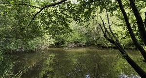 Parte selvagem do lago Shefield - Uckfield, Reino Unido imagens de stock