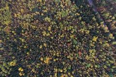 Parte superior abaixo da vista de uma floresta em cores do outono imagem de stock royalty free