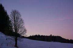 Parte superior alemão da montanha dos cumes na árvore do inverno no crepúsculo imagem de stock