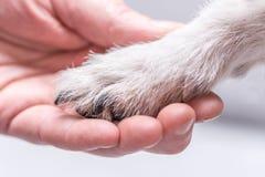 Parte superior ascendente próxima da vista das patas do cão e da mão humana imagem de stock