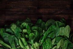 Parte superior crua dos espinafres do alimento da desintoxicação Fotos de Stock Royalty Free