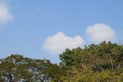 Parte superior da árvore Imagens de Stock Royalty Free