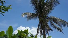 Parte superior da árvore de coco no fundo do céu filme