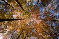 A parte superior da floresta Imagens de Stock